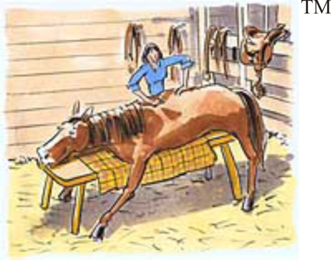 ADA – KIDEUP – Certified Equine Massage & Craniosacral Practitioner For Horse & Rider