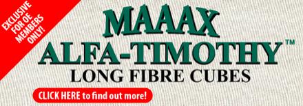 MAAAX Alfa-Timothy Long Fibre Cubes